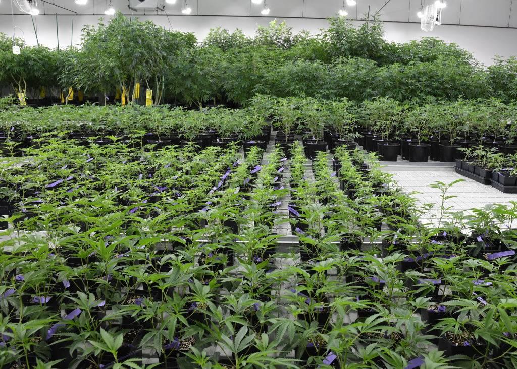 The Public-Health Case for Legalizing Marijuana | National Affairs